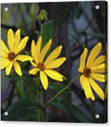 Yellow Trined Acrylic Print