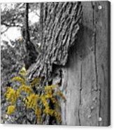 Yellow Tufts Acrylic Print