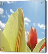 Yellow Tulip Flower Art Prints Spring Blue Sky Clouds Baslee Troutman Acrylic Print