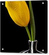 Yellow Tulip In Striped Vase Acrylic Print