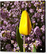 Yellow Tulip In The Garden Acrylic Print by Garry Gay