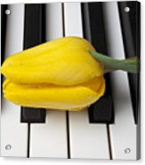 Yellow Tulip On Piano Keys Acrylic Print by Garry Gay