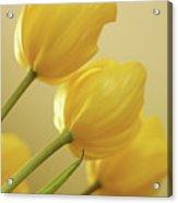 Yellow Tulip Trio Acrylic Print by Bonnie Bruno