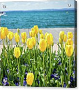 Yellow Tulips Near Lake Acrylic Print