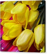 Yellow Tulips With Dew Drops Acrylic Print