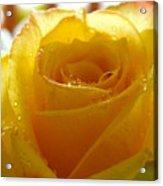 Yellow Valentine Roses - 4 Acrylic Print