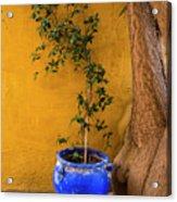 Yellow Wall, Blue Pot Acrylic Print