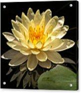 Yellow Waterlily Acrylic Print