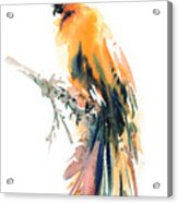 Yellow Wild Bird Acrylic Print