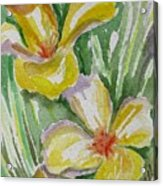 Yellow Wild Flowers II Acrylic Print