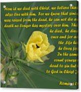 Yellow Wildflower - Romans Acrylic Print