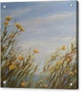 Yellow Wildflowers In The Sea Breeze Acrylic Print