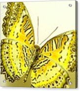 Yellow Wings In Gold Acrylic Print