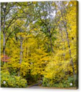 Yellow With Vertical Lines Acrylic Print