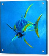Yellowfin Tuna Three Acrylic Print