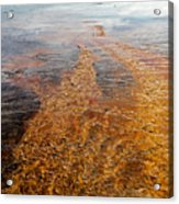 Yellowstone Colors #7 Acrylic Print