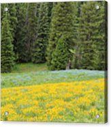 Yellowstone Meadow Acrylic Print