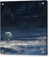 Yellowstone White Lady Unsigned Acrylic Print