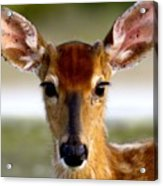 Yes Deer Acrylic Print