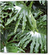 Yes Snow In Florida Acrylic Print