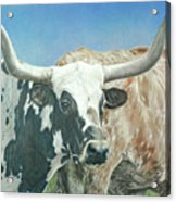 Yes, This Is Texas Acrylic Print
