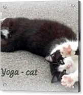 Yoga - Cat Acrylic Print