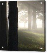 York River State Park Rd Foggy Woods Ll Acrylic Print