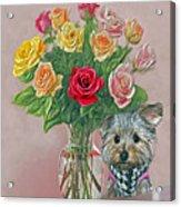 Yorkey Rose Acrylic Print