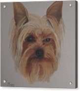 Pickles The Yorkie Acrylic Print