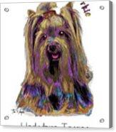 Yorkshire Terrier Pop Art Acrylic Print