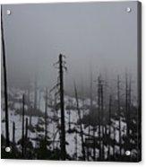 Yosemite 11 Acrylic Print