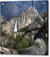 Yosemite Falls Tree Acrylic Print