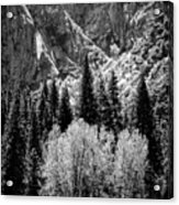 Yosemite Meadow In Black And White Acrylic Print