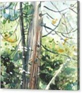 Yosemite Spring Acrylic Print