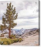 Yosemite Tree Acrylic Print