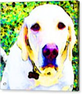 You Are My World - Yellow Lab Art Acrylic Print