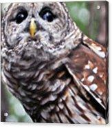 You Can Call Me Owl 2 Acrylic Print
