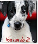 You Can Do It Acrylic Print by Amanda Barcon