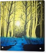 You Cant See The Forest For The Trees Acrylic Print
