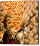 You Chicken  Acrylic Print