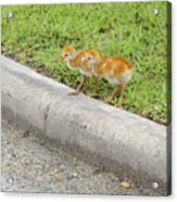 You First. No You Go First Acrylic Print