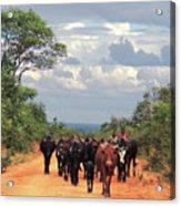 Young Herders, Zambia Acrylic Print