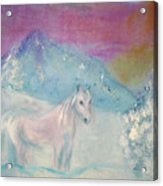 Young Horse On Snowy Mountain Acrylic Print