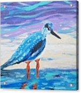 Young Seagull Coastal Abstract Acrylic Print
