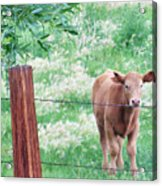 Youngster Acrylic Print
