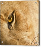 Your Lion Eye Acrylic Print by Carolyn Marshall