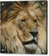 Your Majesty Acrylic Print