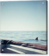 You're Gonna Need A Bigger Boat Acrylic Print
