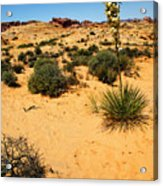 Yucca And Desert Primrose In The Valley Of Fire Acrylic Print