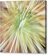 Yucca Burst Acrylic Print